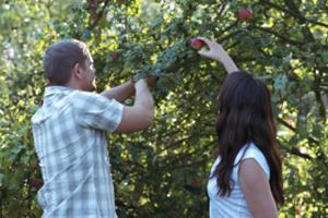 Photo: Apple Picking // Thinkstock