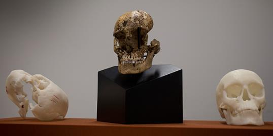 Photo: The skull of
