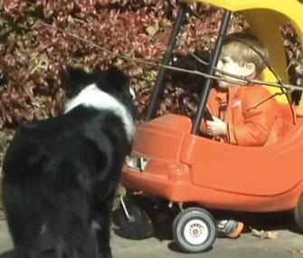 Photo: CNN // Ashepoo, an Australian Shepherd, stayed by Peyton Myrick's side while he was missing in the woods.
