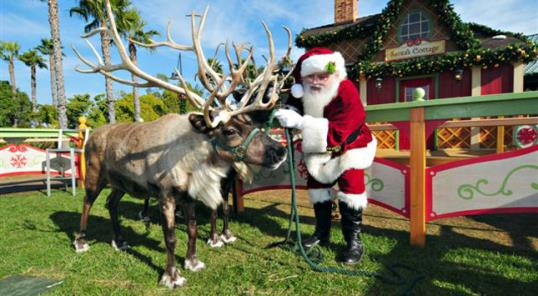 Photo: Mike Aguilera, SeaWorld San Diego // Kriss Kringle visits with a reindeer at Santa's Cottage at SeaWorld.