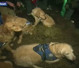 Photo: CNN via YouTube // Comfort dogs visit children in Newtown, Conn.