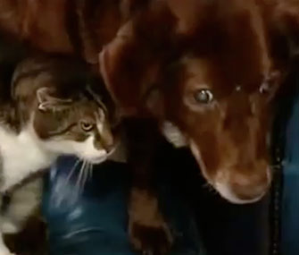 Photo: YouTube // Pwditat made himself a guide cat for blind dog Terfel.