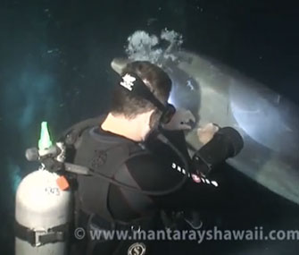 Photo: CBS News / A dolphin sought help from a diver when he was tangled in fishing line.