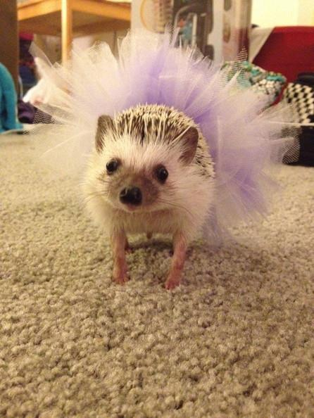 Hedgehog cheerleader // Photo: Etsy/Tranquills