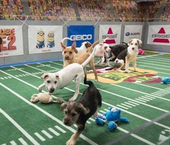 Photo: Animal Planet / Puppies take to the field at Puppy Bowl IX.