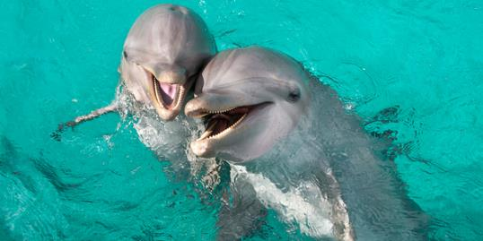 Photo: Dolphins call each other by name / Eco/UIG/Getty Images