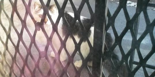 Photo: Cat rescued from shaft / via Facebook
