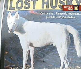 Photo; WPIX / A servicewoman is searching for her dog, who disappeared while she was deployed with the Air Force.