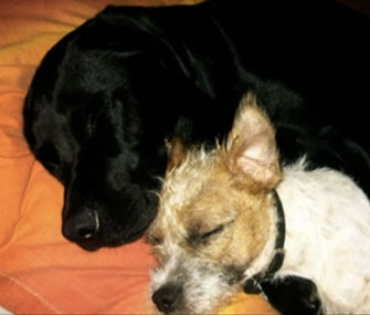 Photo: Vetstreet via Yahoo / Eddie, a Lab, and Milo are best buddies