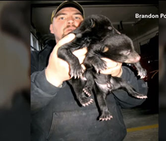 Photo: CNN / A firefighter rescued three bear cubs he found on the side of a South Carolina road.