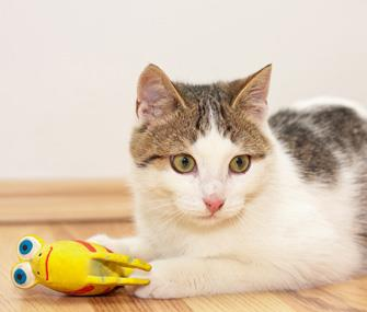 Photo: Kitten playing with a toy / Thinkstock