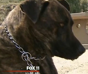 Photo: Mole, a 1-year-old dog, is being credited with saving the life of a trapped man / My Fox LA