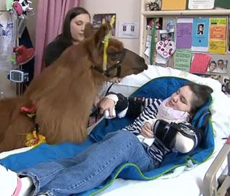 Rojo the llama visits a young patient in an Oregon hospital. // Photo: CNN