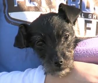 Photo: Kia survived for a month in an abandoned car in Missouri. / KHSB
