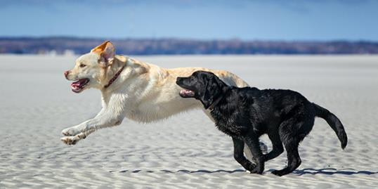 Photo: Dogs running on the beach / Betty Wiley/Getty Images 