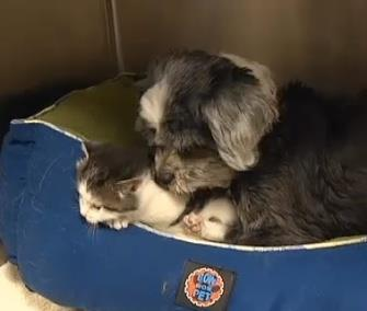 Photo: A dog in South Carolina has adopted this kitten as her own / Fox Carolina&#10;&#10;