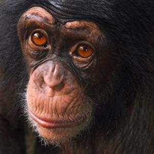 Photo: Chimp / Eduardo Cabral/Getty Images