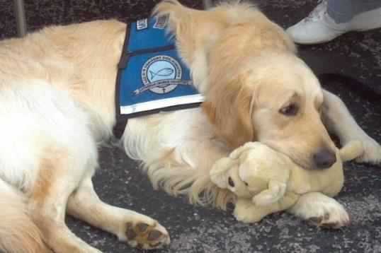 Photo: Moses Comfort Dog / Facebook