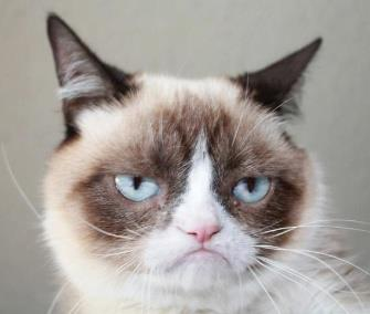 Photo: Grumpy cat has landed her own movie deal. Grumpy Cat / Facebook