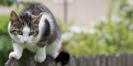 Photo: Cat walking on fence / Christina Reichl Photography/Getty Images