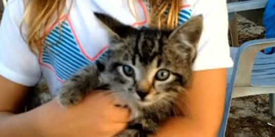 Photo: Still of the kitten that was rescued from a vending machine (WAFF, http://aka.ms/rescuedkitten)