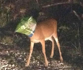 Photo: Two sheriff's deputies came to the aid of this Key deer in Florida. / Joshua Gordon, Monroe County Sheriff's Office