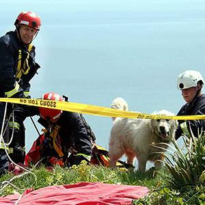 Photo: Sam the Golden Retriever survived fall off cliff / SWNS