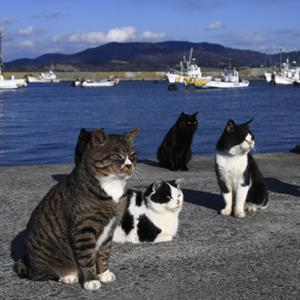 Photo: Cats on Japan's Cat Island / Tohoku Color Agency/Getty Images