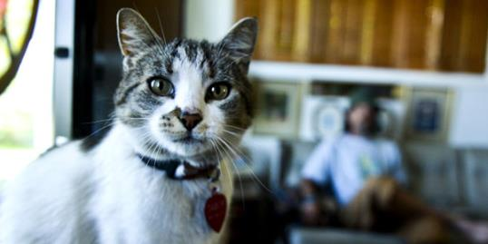 Photo: A cat named 'Mata Hairi' was saved by a homeless man//Dylan Brown Independent Record