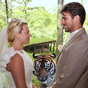 Photo: Tiger photo bombs wedding pic / Vicki Lea Boulter /SWNS.com