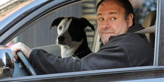 Photo: James Gandolfini with his rescue pit bull / Splash News