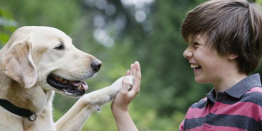Photo: Dogs see their owners like parents study finds / Compassionate Eye Foundation/Jetta Productions/Getty Images