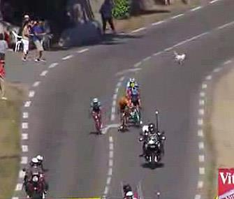 Photo: A small dog barely managed to run out of the way of cyclists on the Tour de France course. / NBC Sports