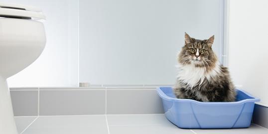 Cat in a litter box. Cat parasites more dangerous than previously thought / Vstock LLC/Getty Images