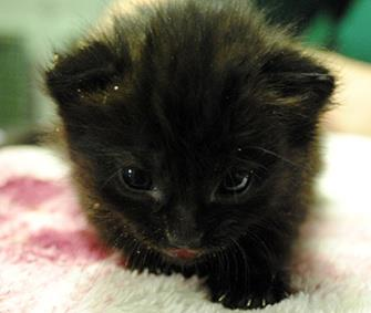 A 4-week-old kitten was found in a box on a London Underground train. / Blue Cross