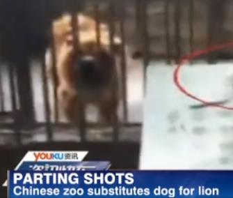 Dog in a Chinese Zoo, courtesy of VetStreet