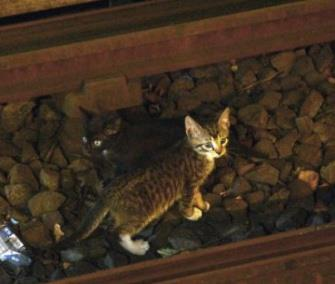 One of the two kittens scampers away from authorities on a New York subway track. / Metropolitan Transit Authority / Twitter
