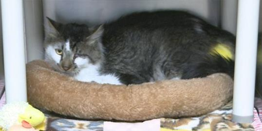 ​A cat named Wyatt, was found in a foreclosed home in Colorado (Courtesy of 9News.com)