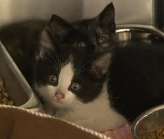 Two kittens are headed to foster care after surviving for five days in a sealed boxcar. / CBC News