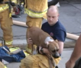 Stella, a Boxer, was pulled from a fire and revived by firefighters in California / KTLA via Life With Dogs