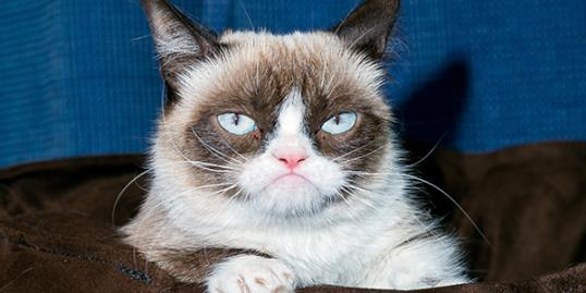 ​Tardar Sauce aka. Grumpy Cat makes an appearance at Kitson Santa Monica on July 23 in Santa Monica, Cali. (Rodrigo Vaz/FilmMagic/Getty Images)