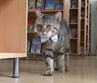 Kuzma wanders through the shelves at a library in Russia. / YouTube / The Atlantic Cities