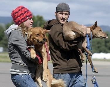 Evacuees carry their dogs at the Boulder Municipal Airport in Boulder, Colo. after being rescued from a flood-damaged area by helicopter on Monday, Sept. 16, 2013. (AP Photo/The Daily Camera, Jeremy Papasso)