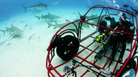 Volkswagen Beetle Shark Observation Cage. Photo by Volkswagen.