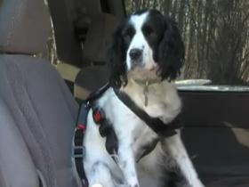 Dog in harness screenshot from Pet Travel Safety Youtube video