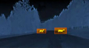 Night-vision animal detection. Image by Autoliv.