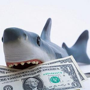 A toy shark holding U.S. dollar bills  Diane Macdonald, Photographer