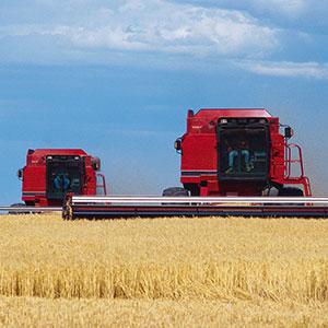 Image: Combines in field (Mark Karrass/Corbis/Corbis)