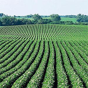Image, Soybean field copyright Corbis, SuperStock