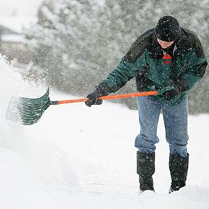 Snow Corbis